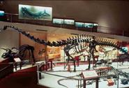 Smithsonian Diplodocus 5