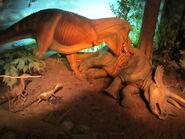 Tyrannosaurus (24149793876)