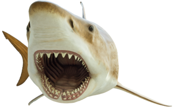 Megalodon | Dinosaur Wiki | FANDOM powered by Wikia