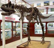 Carnotaurus, Chlupáč Museum, Prague-2