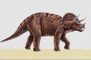 Triceratops026