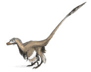 Velociraptor dinoguy2