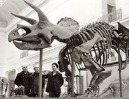 Smithsonian Triceratops 1930s