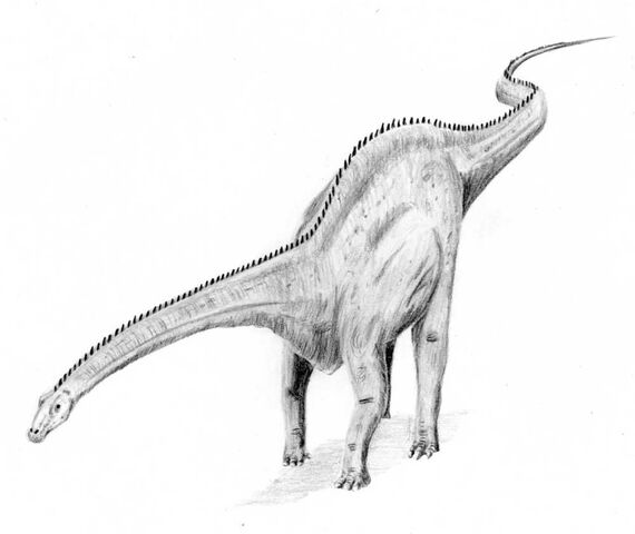 File:Diplodocus4.jpg