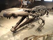 Deinosuchus hatcheri - Natural History Museum of Utah - DSC07251