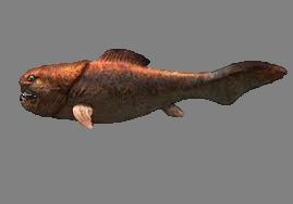 Dunkleosteus | Dinosaur Wiki | FANDOM powered by Wikia
