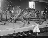 Amnhtriceratops 1959
