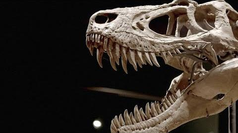 How T-Rex Preyed on Armored Dinosaurs