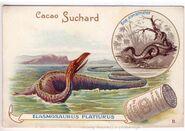 Elasmosaurus - Suchard