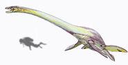 ElasmosaurusDB15