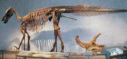 DNMH Edmontosaurus