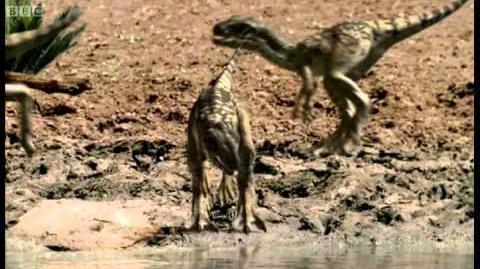Infant Allosauruses - Walking with Dinosaurs Ballad of Big Al - BBC