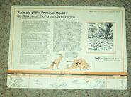 Primeval World Struthiomimus card back