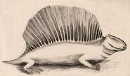 Case Dimetrodon, 1908