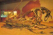 Fort-Worth-Allosaurus-1000x6621-700x463