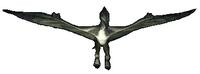 Pteranodon 2