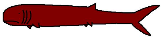 Orodus