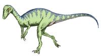 Eoraptor sketch5