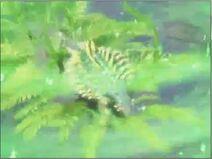 Jardin esmeralda 1 II