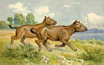 Paleotheriumhorse