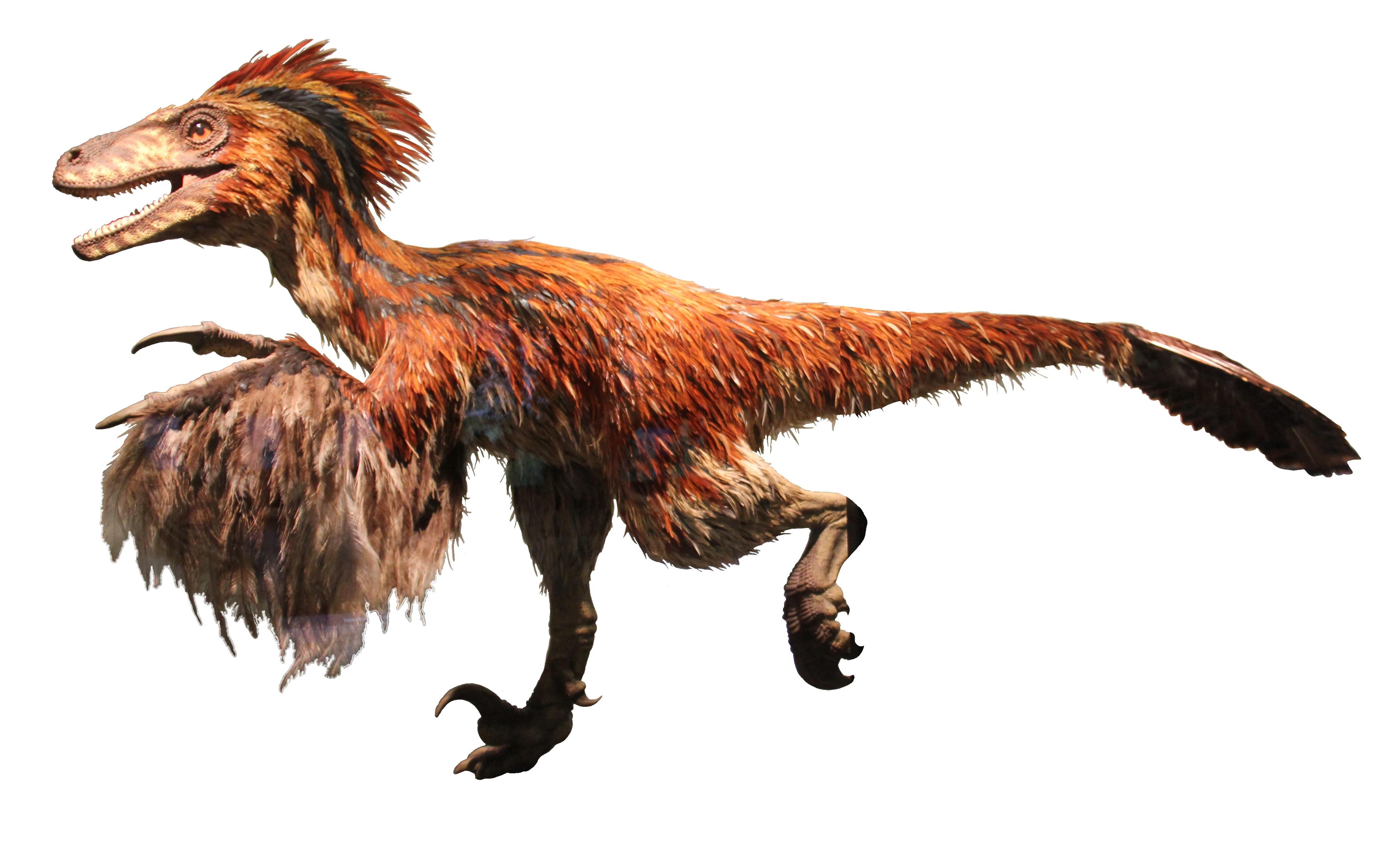 Deinonychus   Dinosaurier Wiki   FANDOM powered by Wikia