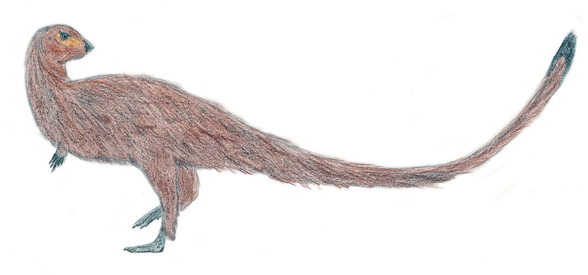 Leaellynasaura   Dinosaurier Wiki   FANDOM powered by Wikia