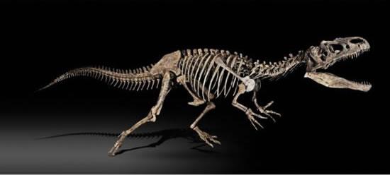 File:Allosaurus-skeleton.jpg
