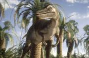 Saurornithoides 3
