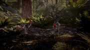 Anchiornis 2