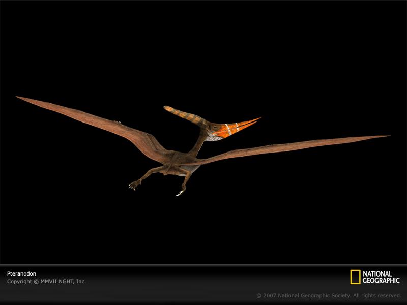 Pteranodon-sw.jpg