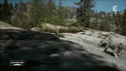 Gorgonops hunting