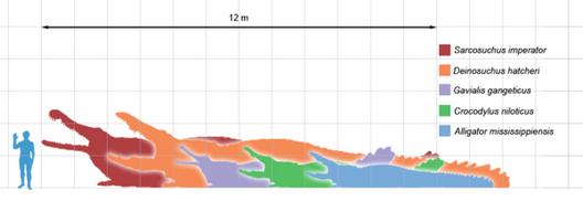 600px-Crocodilians scale