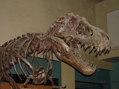 2008-03-08 03-09 Washington 027 Museum of Natural History