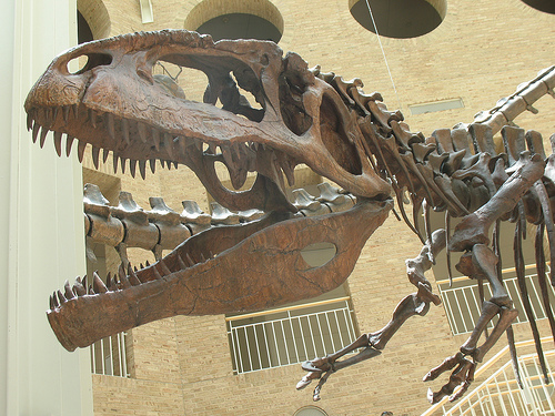 File:Giganotosaurus .jpg
