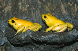 Adults on Ledge