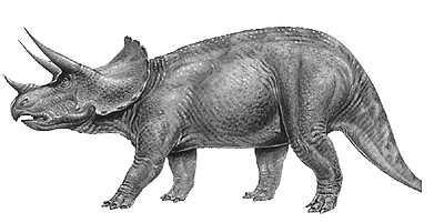 Triceratops Dino Wiki Fandom Powered By Wikia