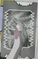 Megaraptor (Spectral) card
