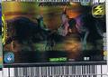 Pachyrhinosaurus Card 8