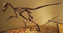 250px-FMNH Deinonychus