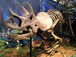 File:250px-Triceratops prorsus - IMG 0697.jpg