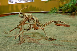 250px-Velociraptor Wyoming Dinosaur Center