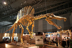 250px-Spinosaurus skeleton