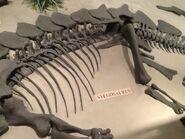 Stegosaurus Body
