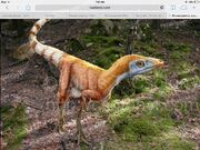 Sinosauropteryx's color