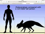 Protoceratops size