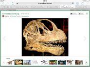 Skull of Camarasaurus