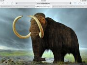 Modelofmammoth