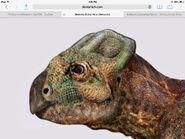 KoreaceratopsFace