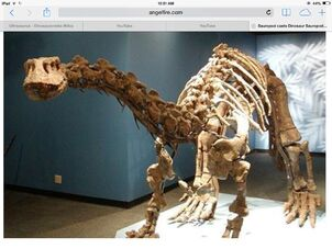 Ultrasaurus fossil