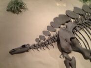 Stegosaurus head at Dickinson dino museum